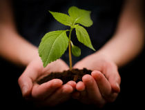 Planting 210 x 160